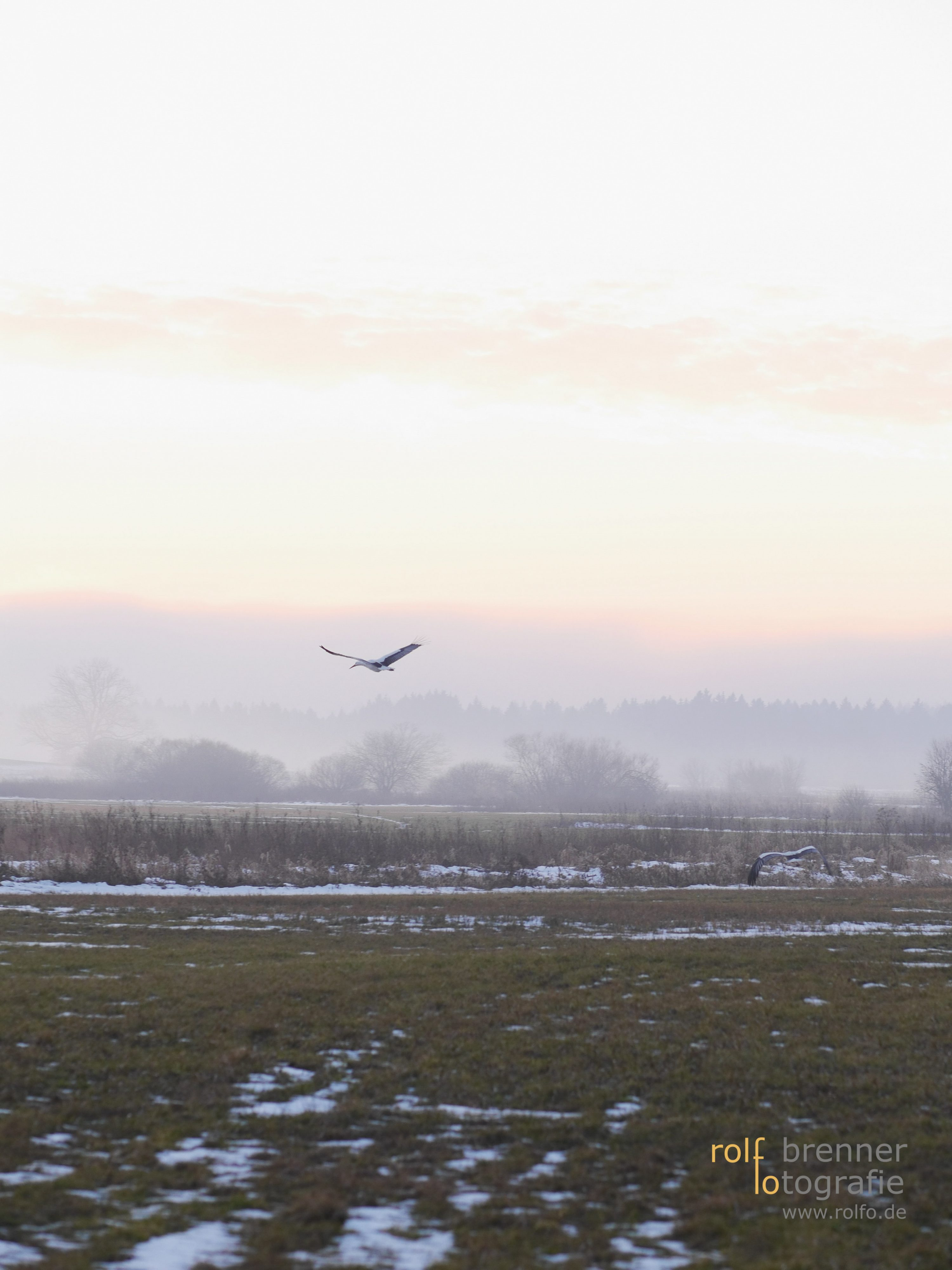 rural landscape in autumn/winter with flying stork
