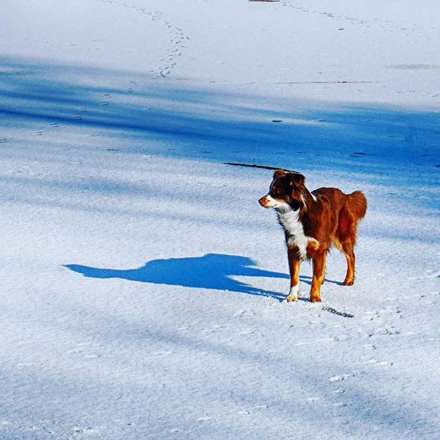 Luzi auf der auf der Eisfläche im Stadtweiher.