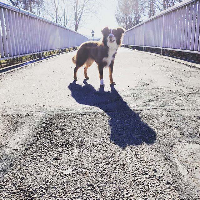 Luzi auf der Brücke über dem Heussring.