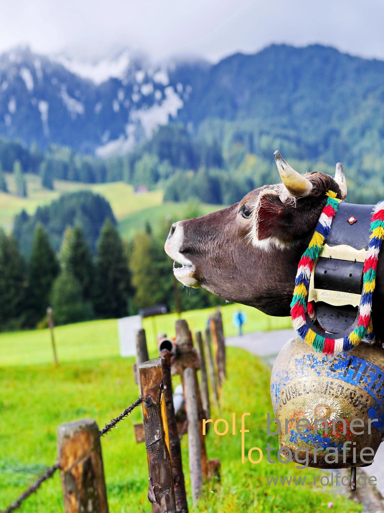 Schumpen  Almabtrieb Viehscheid