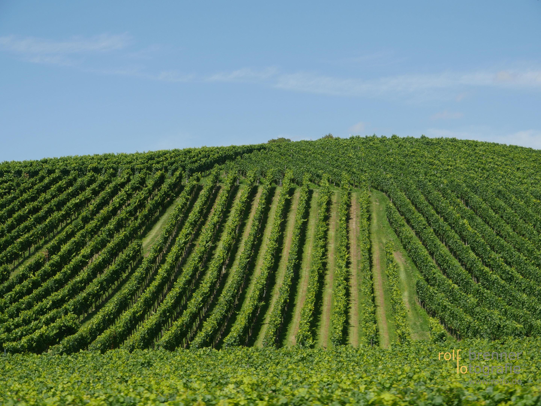 Weinfelder bei Birnau