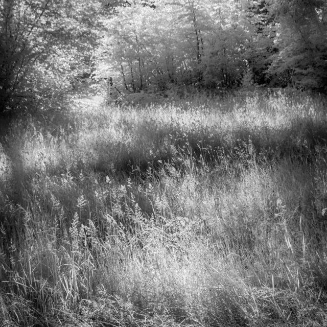Das hohe Gras gestern im Hoefelmayrpark.