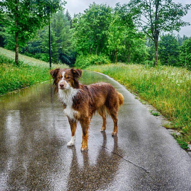Luzi mag keinen Regen.