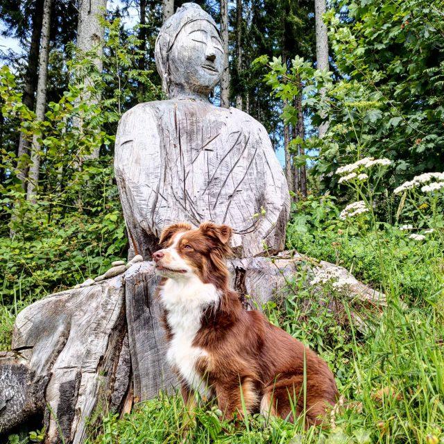 Luzi goes Zen. #buddha #Zen #hund #buche …