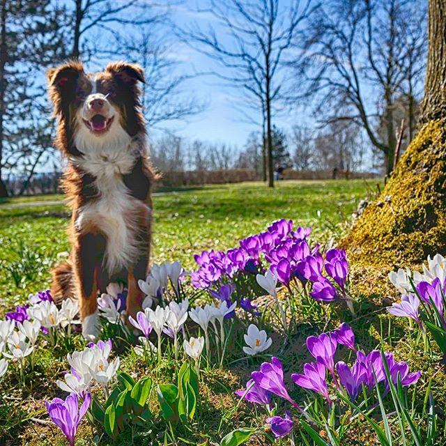Luzi freut sich über den Frühling.