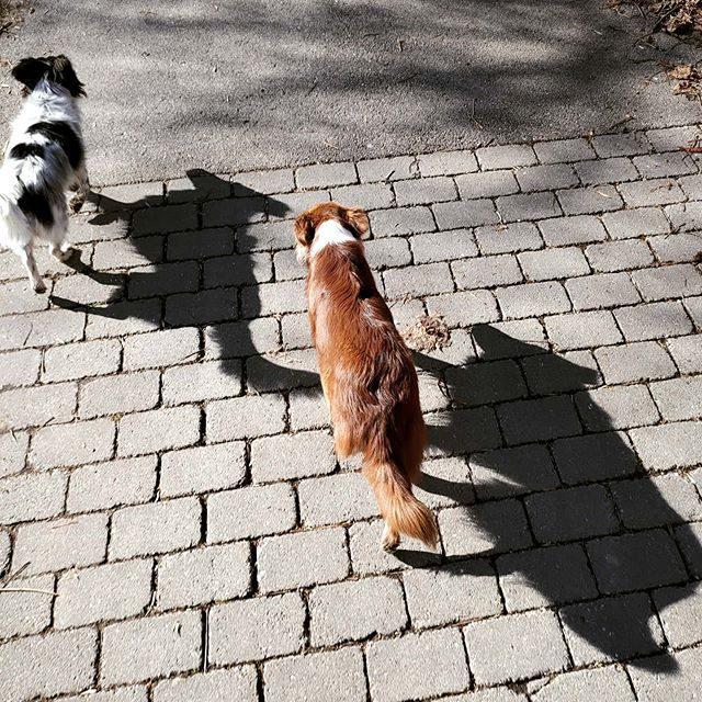 Bärli und Luzi und ihre Schatten auf dem  Weg der Iller entlang.