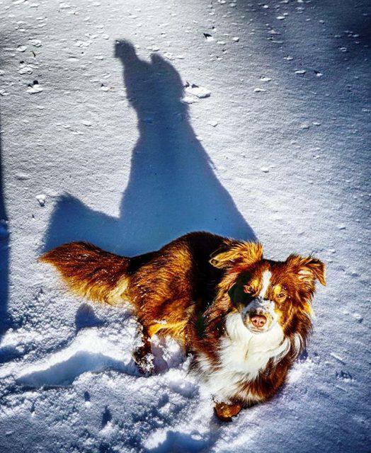Luzi ruht sich im Schnee aus.