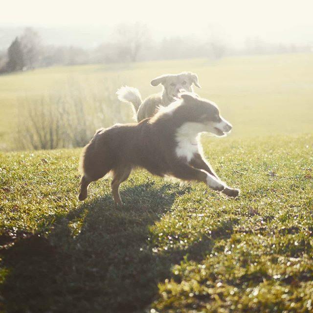 Luzi spielt mit einem anderen Hund