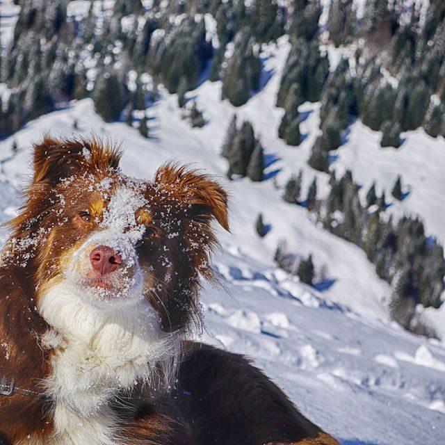 Luzi auf Skitour.