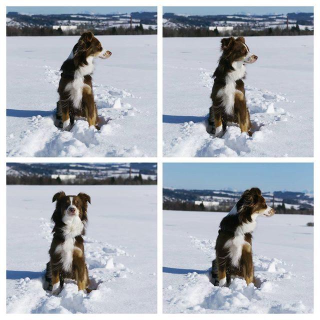 Luzi und der Schnee.
