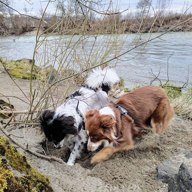 Bärli und Luzi beim gemeinsamen Sand buddeln.