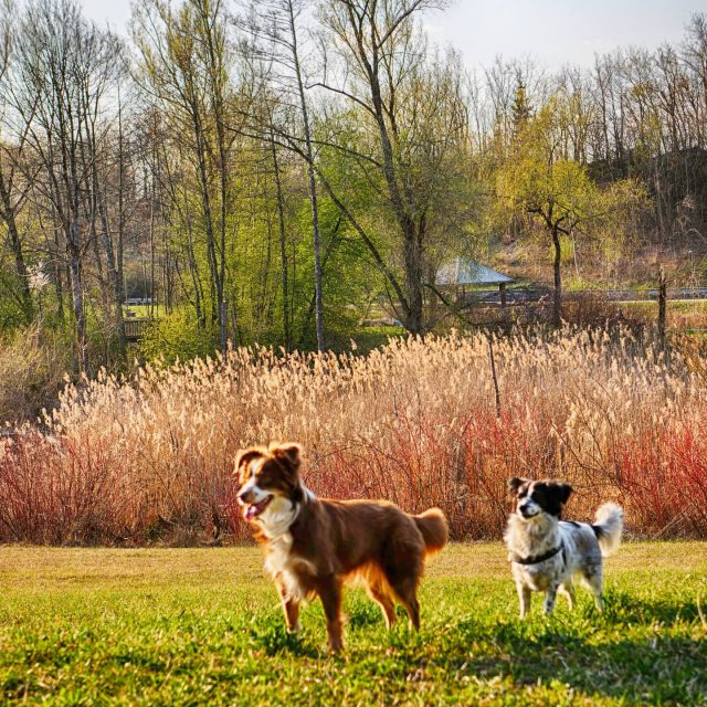 Bärli und Luzi im Engelhaldepark.