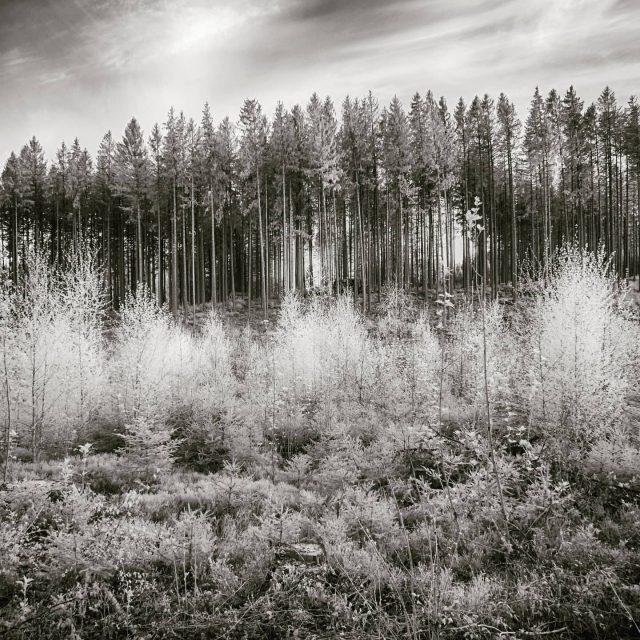 Wald bei Bucharts. - kempten, Bucharts, Wald