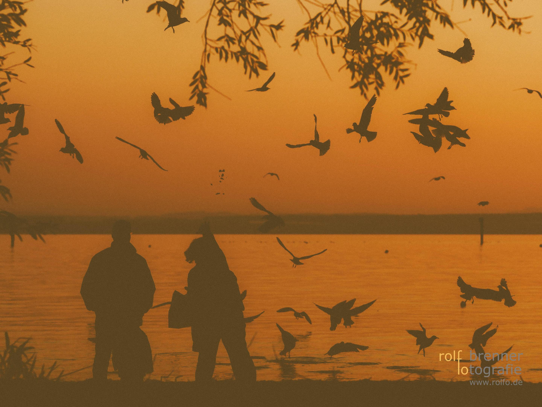 Familie füttert Möwen am Lindauer Ufer