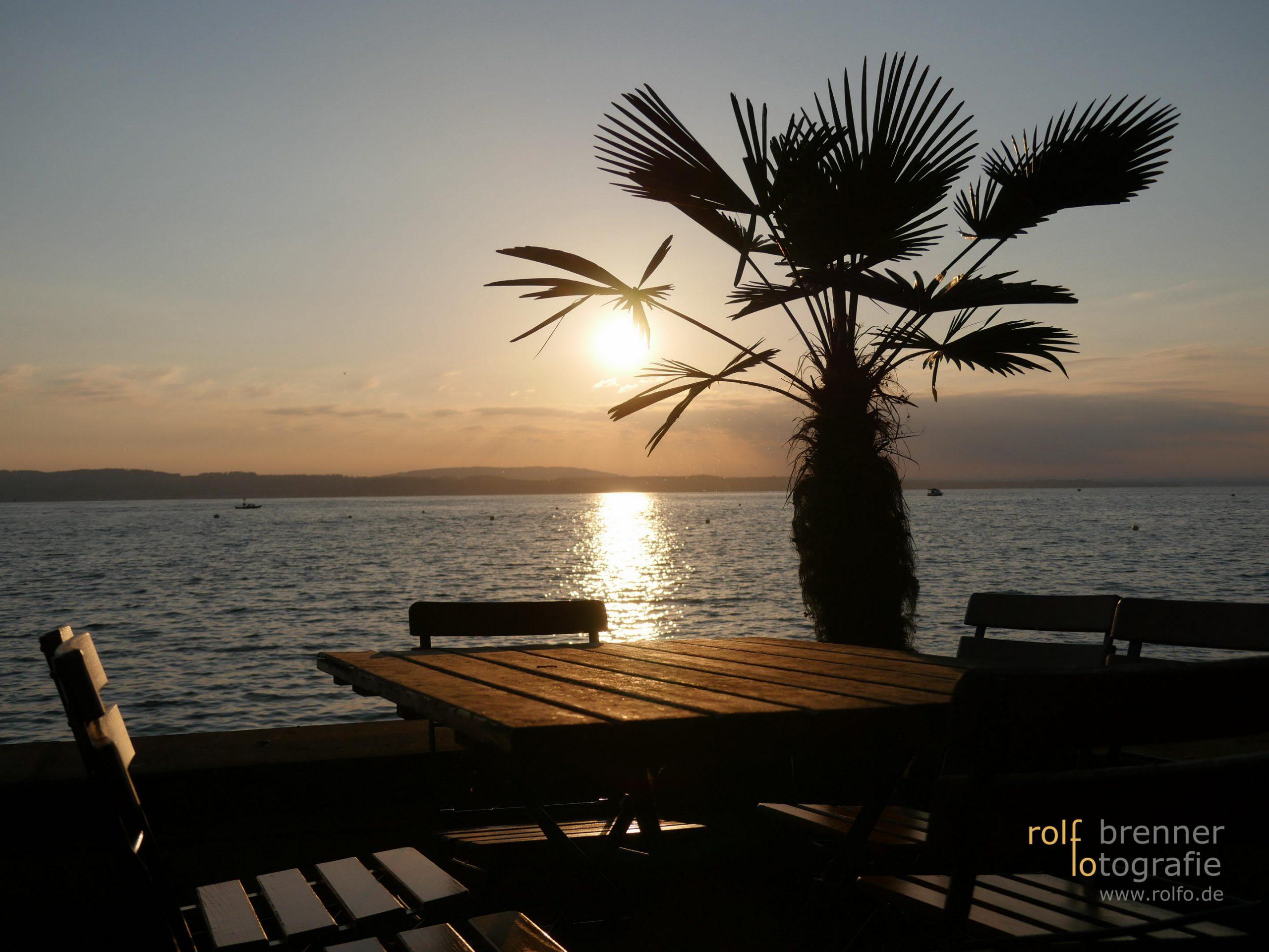 Ein freier Tisch unter Palmen am Bodensee