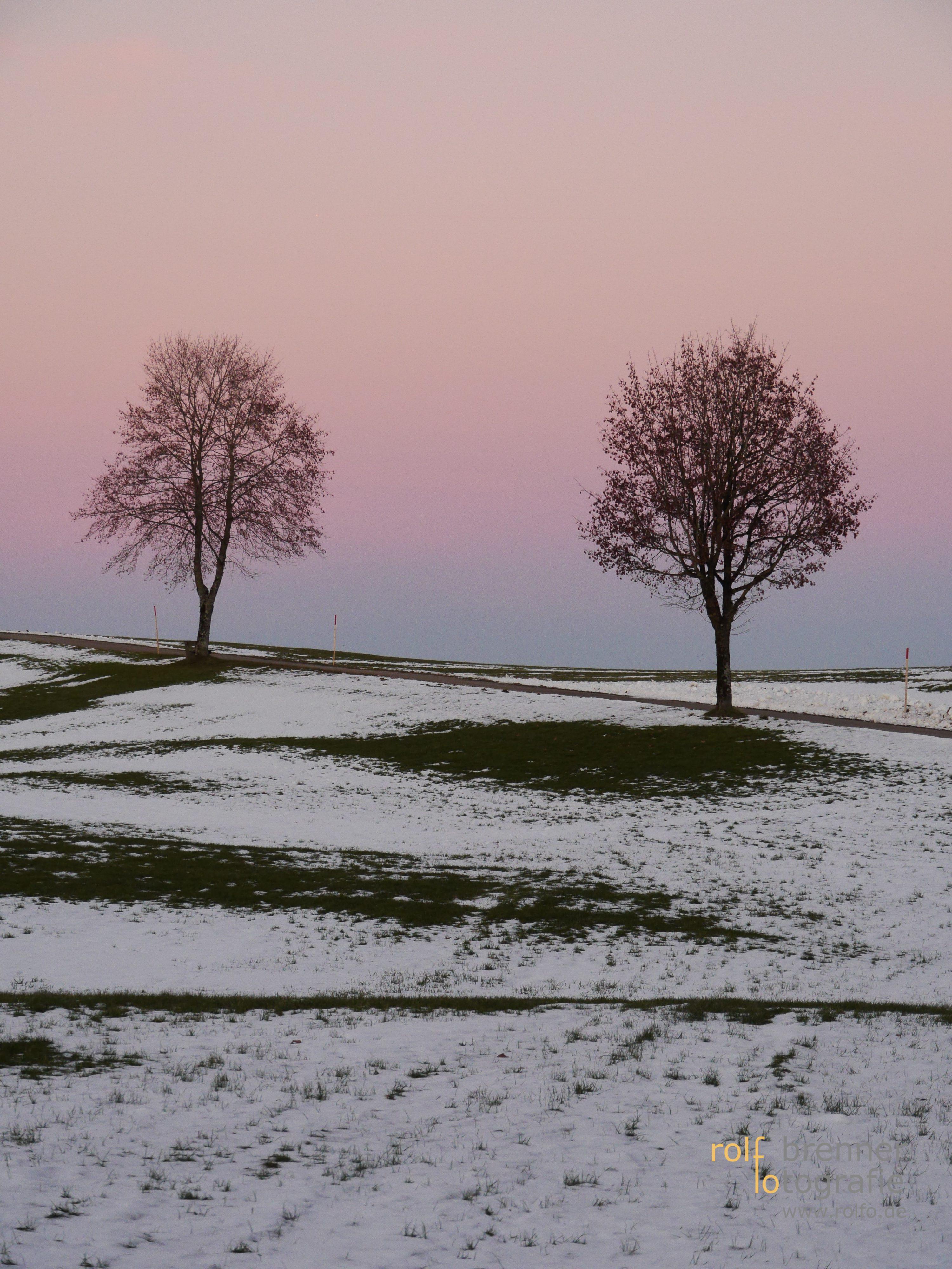 Bäume in Neutrauchburg